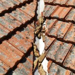 Roof re-pointing Melbourne